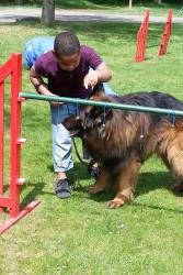 doelen-buro-hond-2