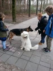 doelen-buro-hond-3